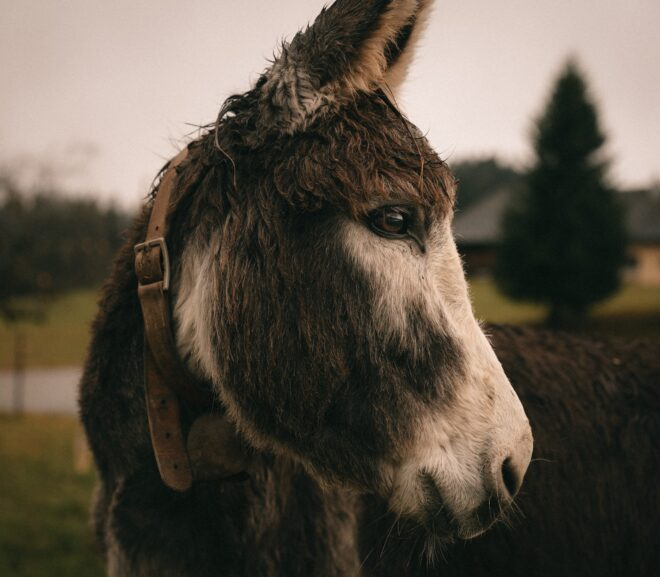 Do Donkeys And Goats Get Along? (8 Important Things To Know)