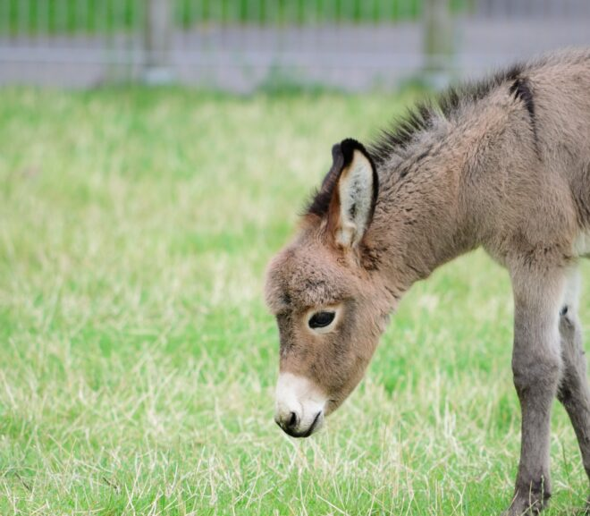4 Best Places With Donkeys For Sale In Alabama (2021)