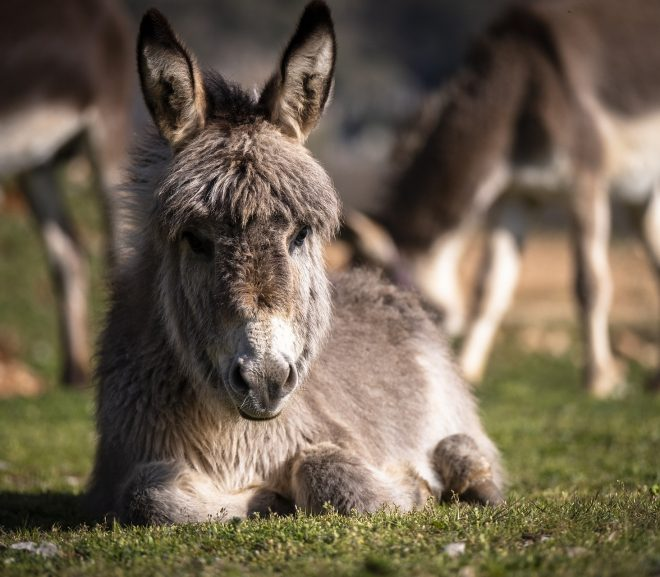 4 Best Places With Donkeys for Sale In Oklahoma
