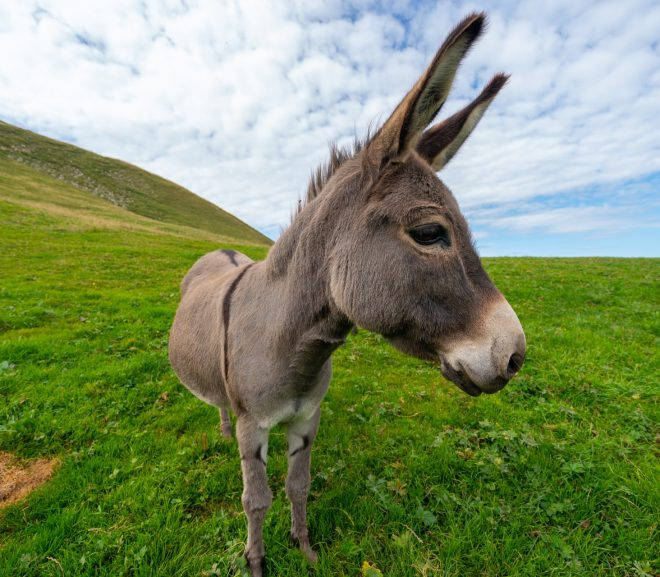 3 Best Places With Donkeys for Sale In Arizona (2021)