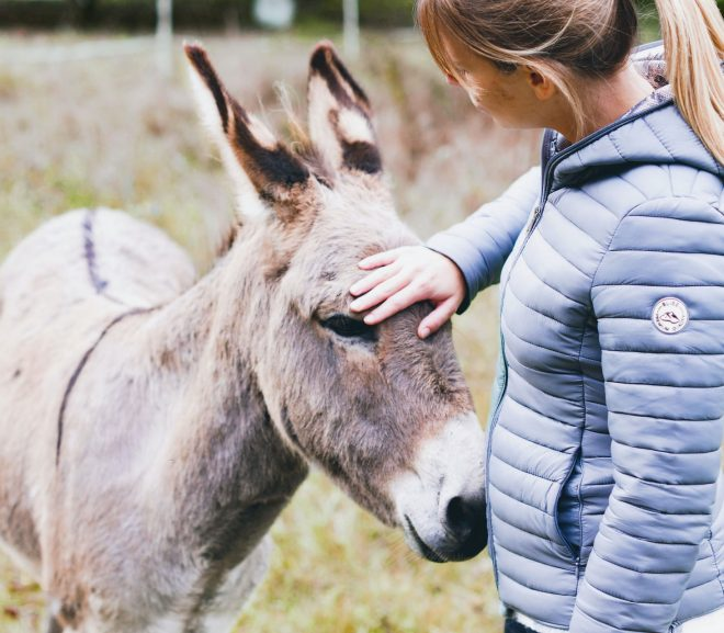 4 Best Places With Donkeys for Sale In Louisiana (2021)