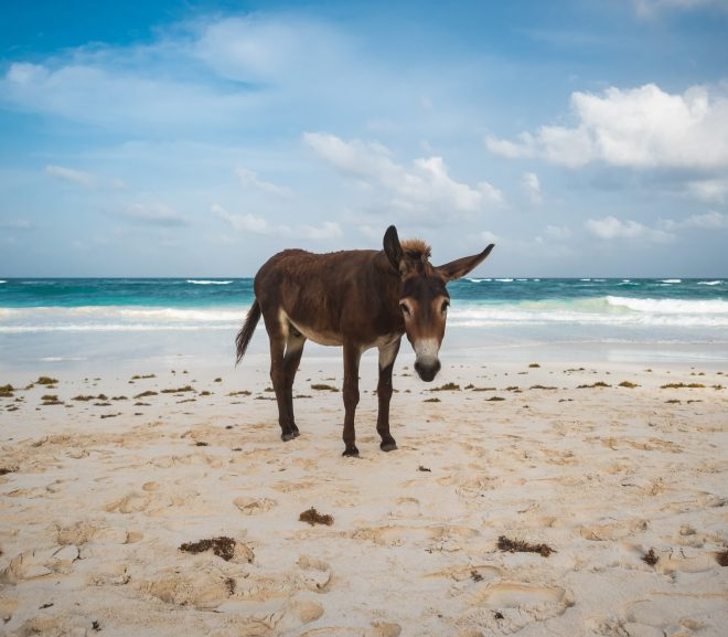 7 Best Places With Donkeys for Sale In Texas (2021)